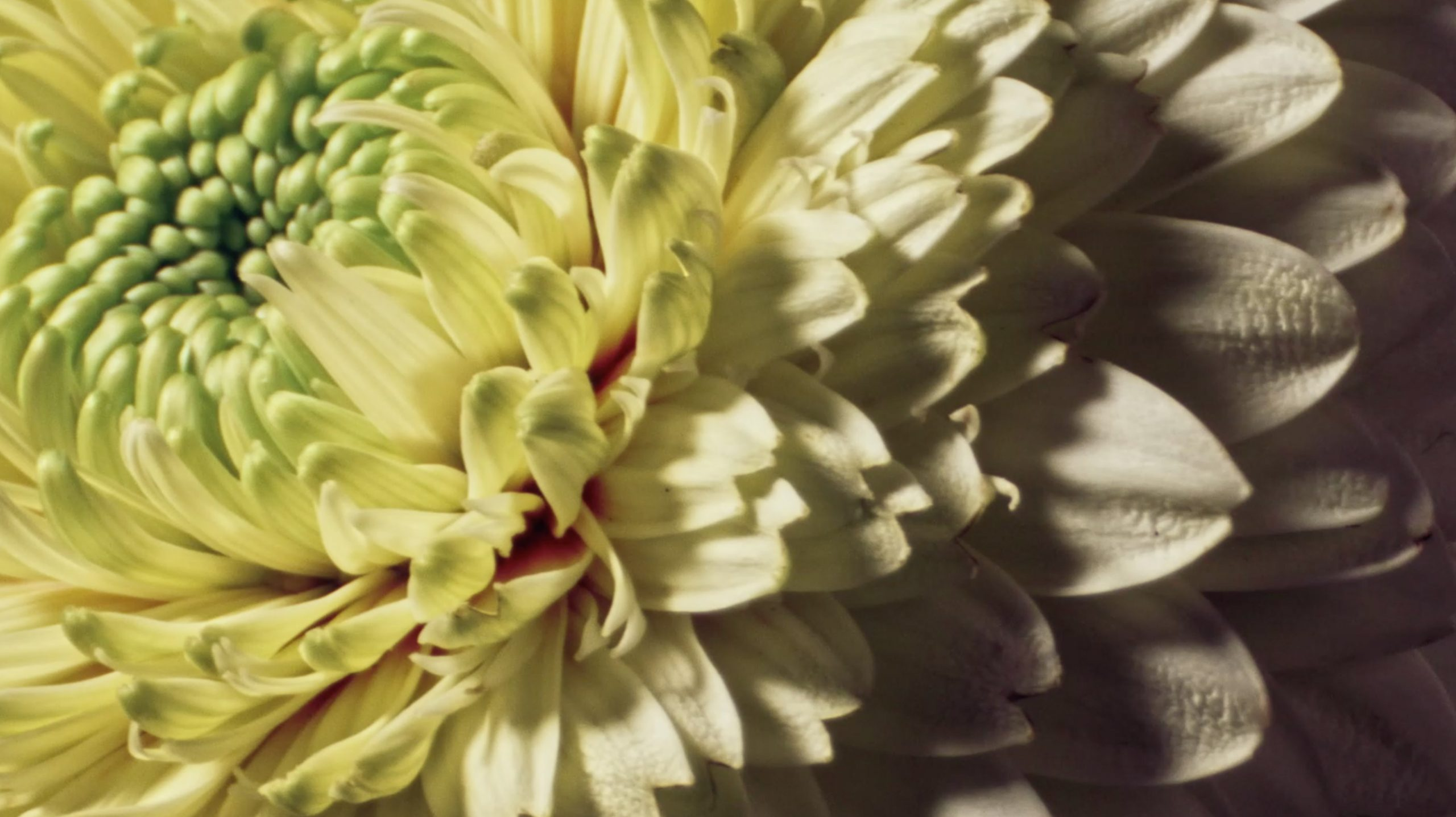Laescondida_flower